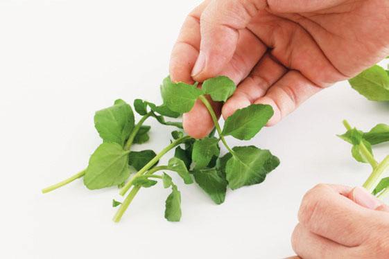 料理前,将叶片从茎梗上摘下。