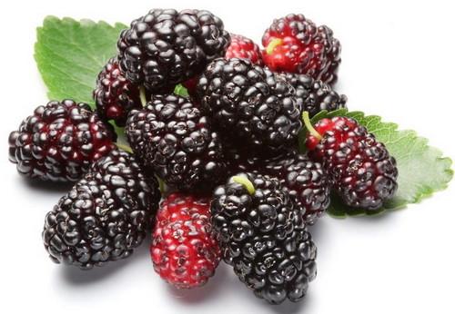 补肾的食物和水果还含有众种人体必要氨基酸