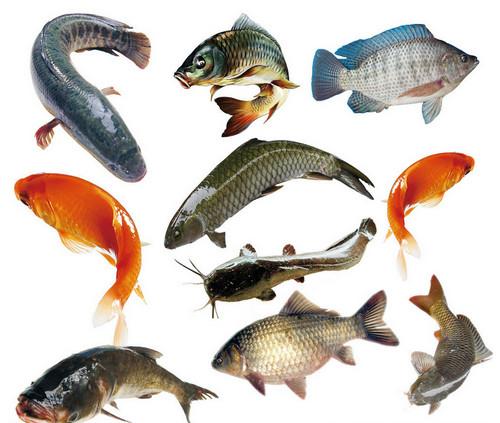 鱼的热量是多少