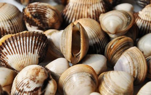 花蛤蜊的营养价值