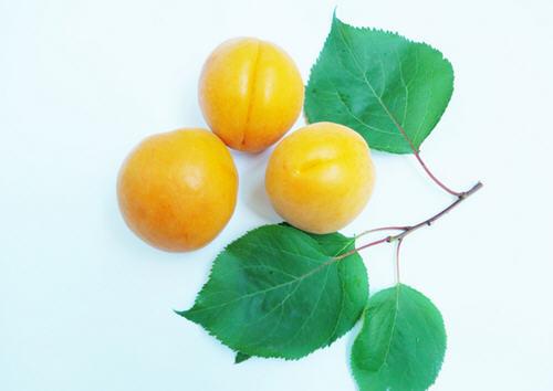 怀孕后能吃杏子吗?