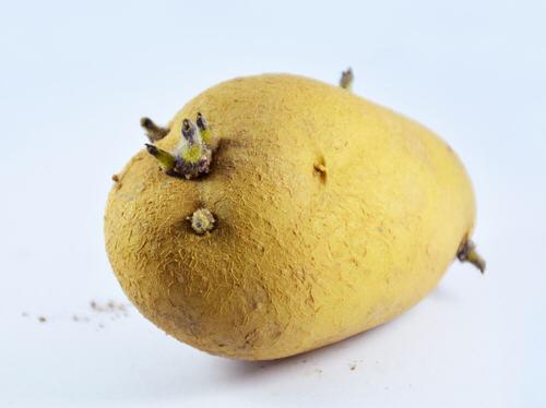 马铃薯发芽能吃吗?