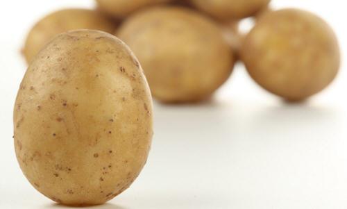 马铃薯是土豆吗?