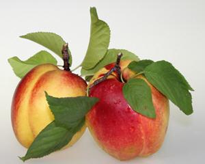 油桃的功效与作用及食用方法