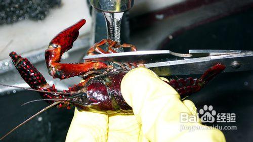 小龙虾怎么清洗