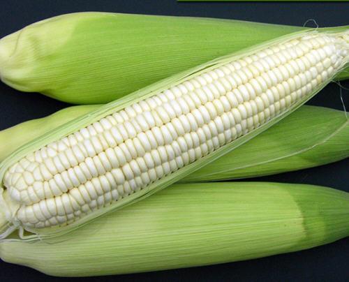 糯玉米是转基因的吗?白糯玉米是转基因的玉米吗
