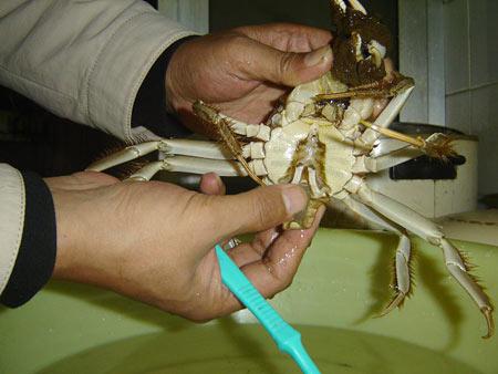 大闸蟹清洗方法5