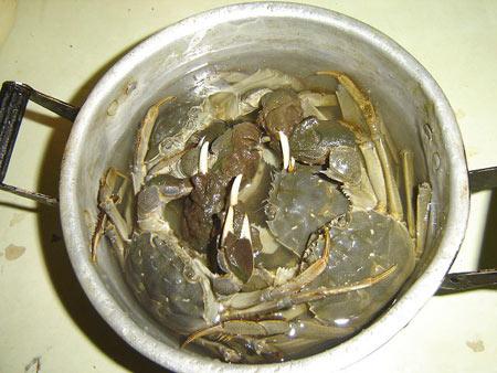 大闸蟹清洗方法7