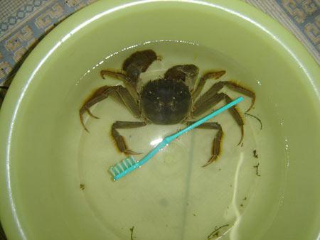 大闸蟹清洗方法